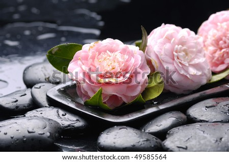 still life with bowl of pink Camellia flower - stock photo