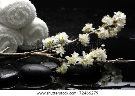 Still life with branch cherry blossom sakura with roller towel
