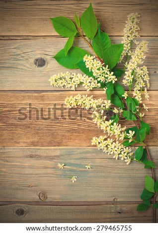 still life with branch of blossom bird cherry on vintage boards antique table with copy space. instagram image filter retro style - stock photo