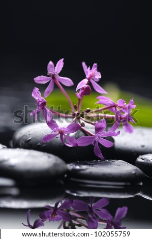 Still life with branch of red orchid on pebbles - stock photo