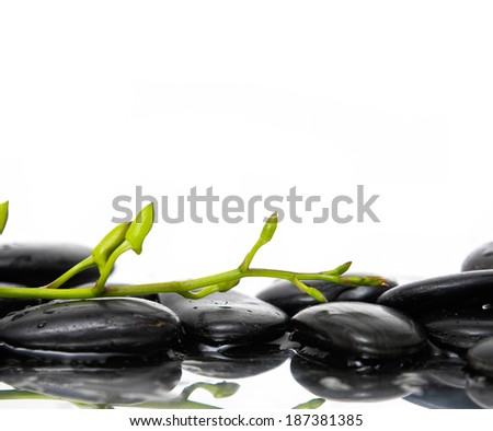 Still life with branch of white orchid buds with black stones
