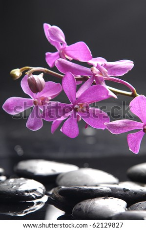 Still life with branch pink orchid - stock photo