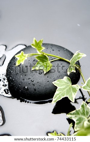 still life with branch spring green ivy - stock photo