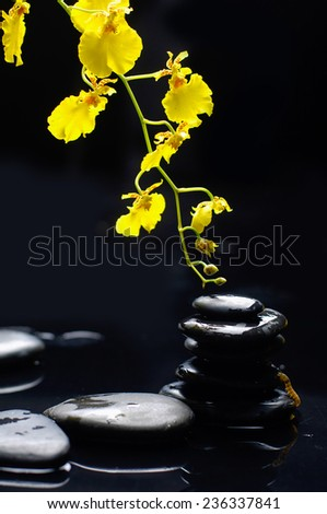 still life with branch yellow orchid ,stacked stones on black background  - stock photo