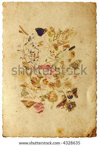 Still life with butterfly in aged sepia paper - stock photo