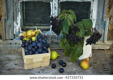 Still life with elderberry, pears and plums against the window of the old house - stock photo