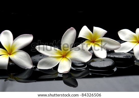 Still life with four frangipani and black pebbles