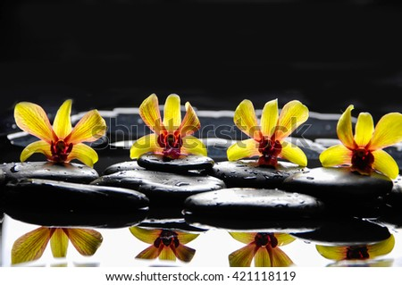 still life with four orchid with stones on water drops - stock photo