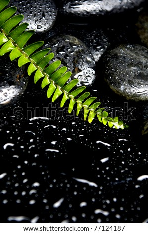 Still life with green fern with stones in water drops - stock photo