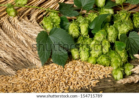 still life with hop cones barley and wheat - stock photo