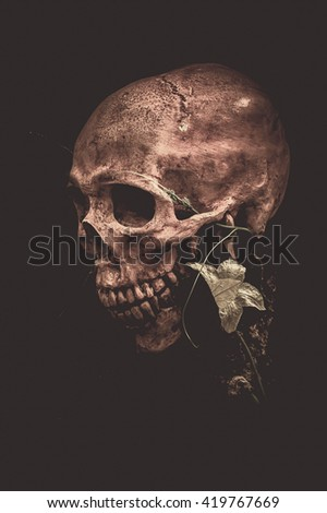 Still life with human skull and flower on black background