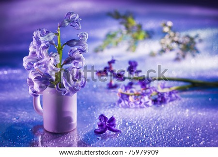 Still life with hyacinth flower in gentle violet colors and magic bokeh - stock photo