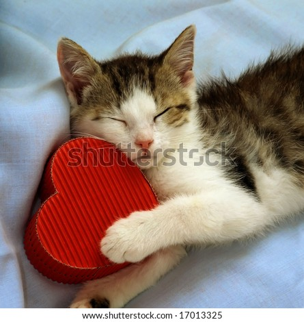 still-life with kitten sleeping with a paper heart