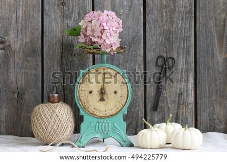 Still life with lovely brunch of pink hydrangea, hortensia on vintage rusty metal mint color scale, wooden spool with twine, three mini white pumpkins, rustic scissors on dark wooden background