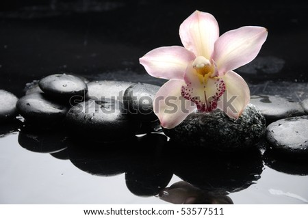 still life with macro of orchid flower