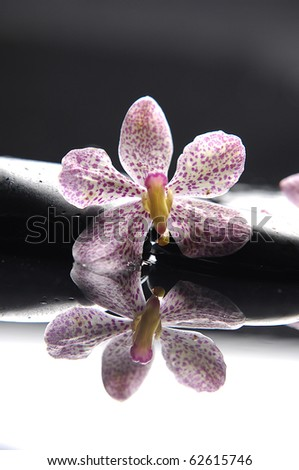 Still life with macro of pink orchid reflection - stock photo