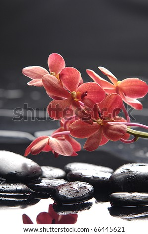 still life with macro of red orchid on pebble - stock photo