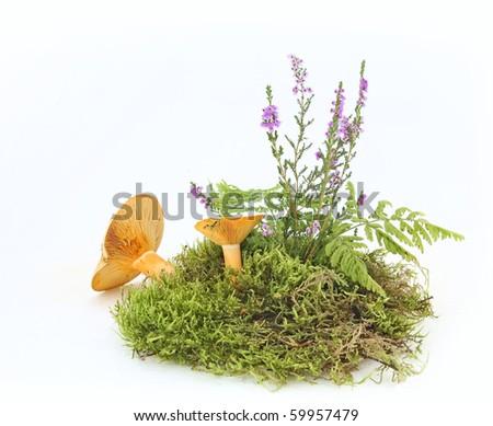 Still life with mushroom, moss and heather - stock photo