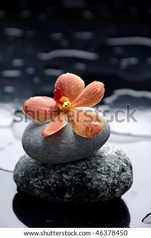 still life with orange flower - stock photo