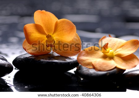 still life with orange flower with water drops - stock photo