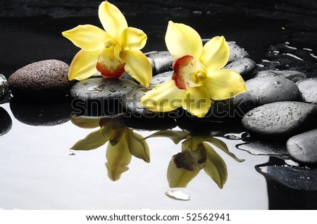 still life with orange orchid with water drops - stock photo