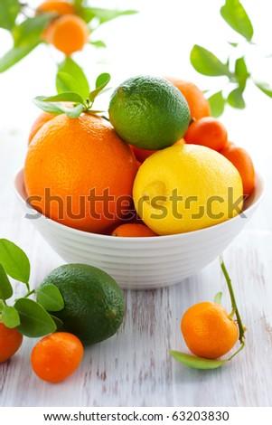 Still life with oranges, lemons,limes,kumquats,calamondin and mandarins - stock photo