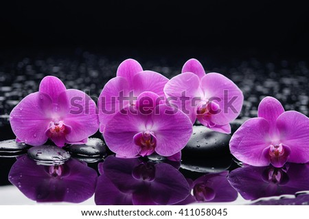 still life with orchid and black stones  - stock photo