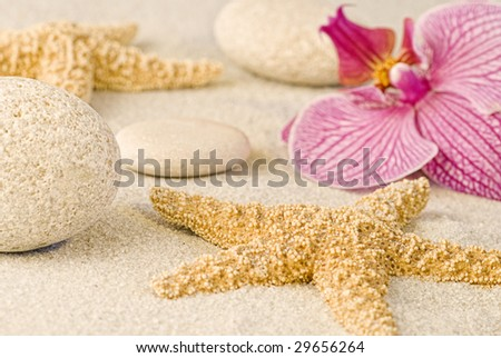 still life with orchid flower and starfish
