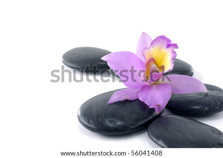 Still-life with orchid on pebbles