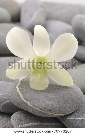 still life with pebble and beautiful white flower - stock photo