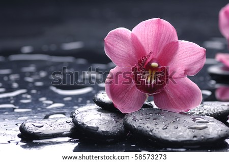 still life with pebble and macro of orchid with water drops - stock photo