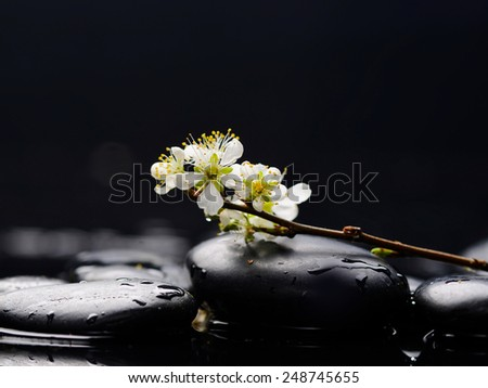 still life with pebble and with lying down cherry blossom - stock photo