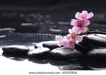 Still life with Pink cherry blossom - stock photo