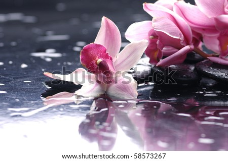 Still life with pink orchid - stock photo