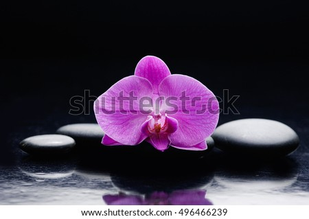 Still life with pink orchid and black stone
