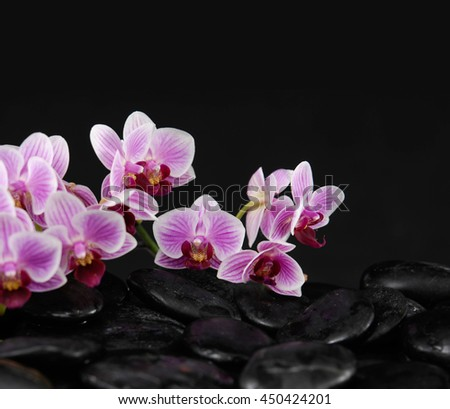 Still life with Pink orchid on pile of black stones  - stock photo