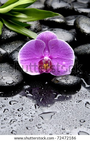 Still life with pink orchid on wet pebble and green palm leaf - stock photo