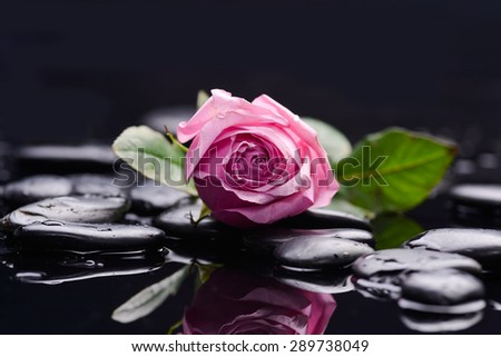 Still life with pink rose and wet stones - stock photo