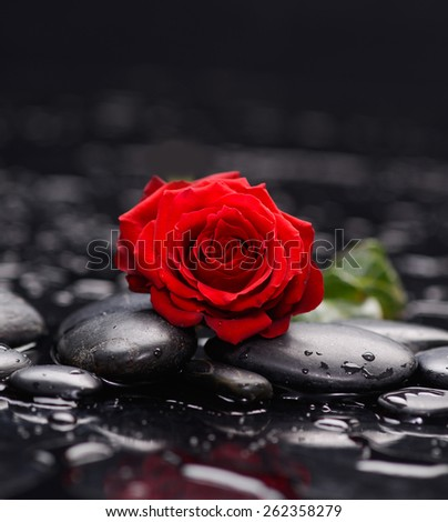 Still life with Red rose and wet stones - stock photo