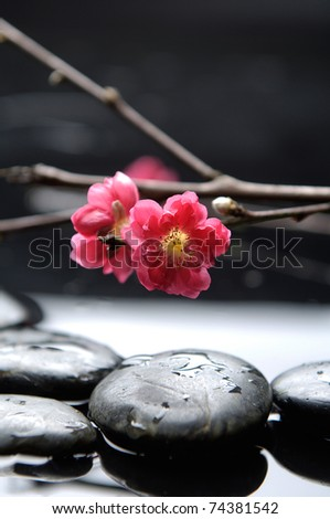 Still life with red sakura blossom - stock photo