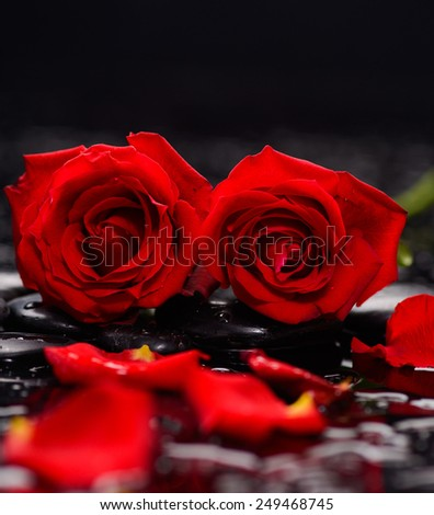 Still life with Red two rose and wet stones - stock photo