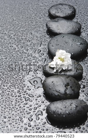 Still life with row of stones white flower in water drops - stock photo