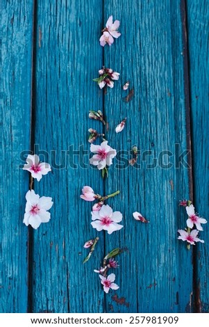 Still life with spring flowers sakura  taken on blue  rustic background.  Spring background concept. Rustic style. Top view. - stock photo