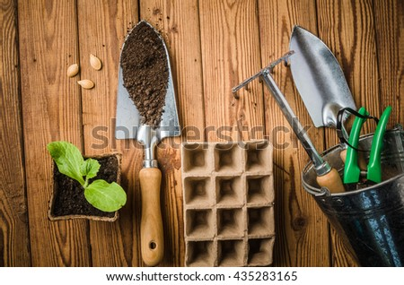 Still-life with sprouts and the garden tool, the top view - stock photo