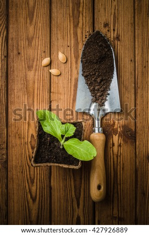 Still-life with sprouts, seeds  and the garden tool, the top view - stock photo