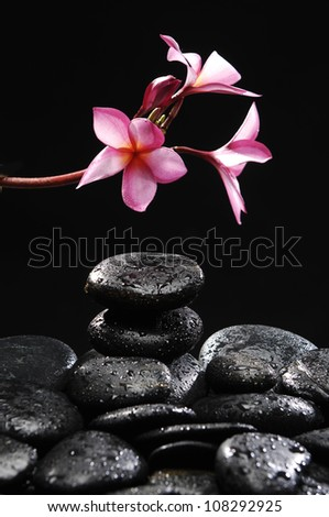 Still life with Stones tower with branch frangipani on wet pebble - stock photo