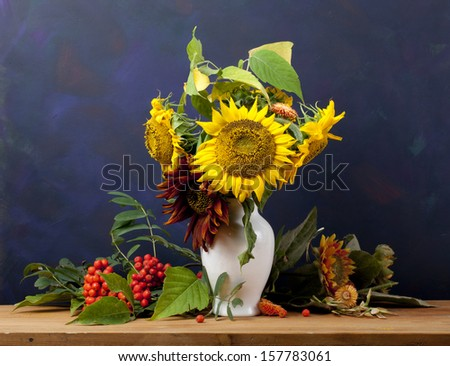 Still life with sunflowers and mountain ash on a blue background - stock photo