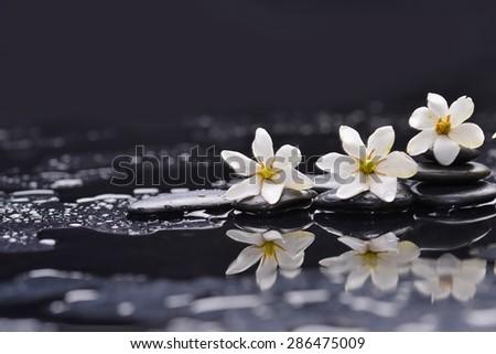 Still life with three gardenia on black pebbles  - stock photo