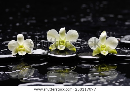 Still life with three white orchid with therapy stones  - stock photo