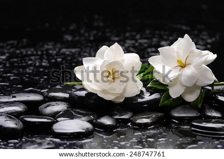 Still life with two gardenia with candle on black pebbles  - stock photo